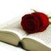 Un libro, una rosa e un bicchiere di Sangria por favor!